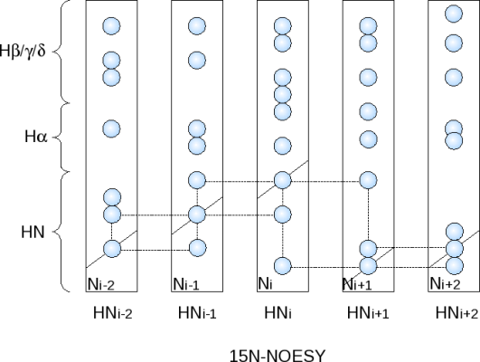 Assignment procedure using a 15N-NOESY-HSQC spectrum