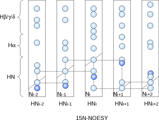 Schematic 15N-NOESY-HSQC - beta-sheet stretch