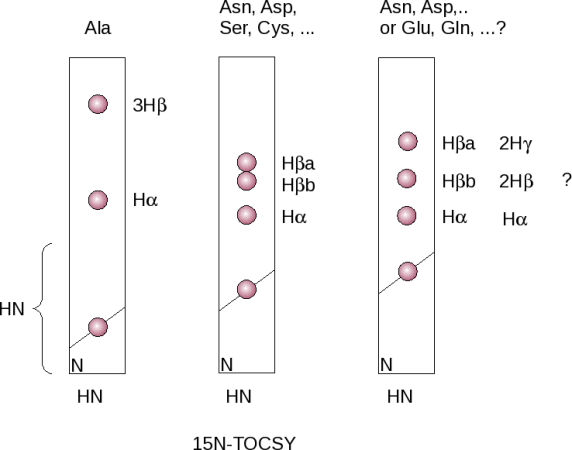 Side-chain assignment with a 15N-TOCSY-HSQC spectrum