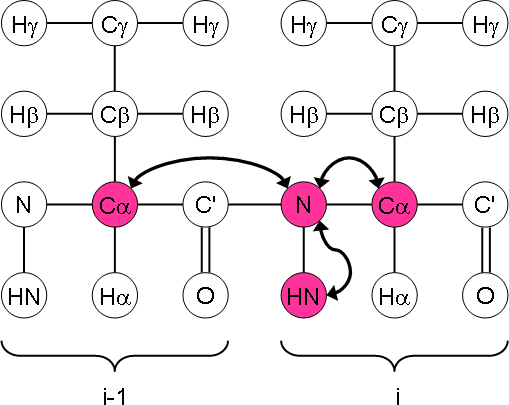 HNCA magnetisation transfer