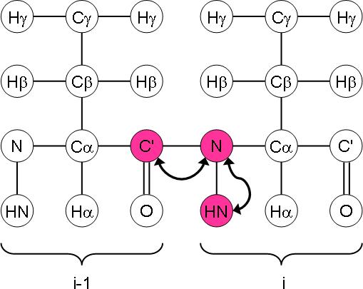 HNCO magnetisation transfer