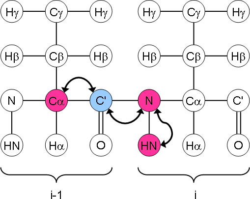 HN(CO)CA magnetisation transfer
