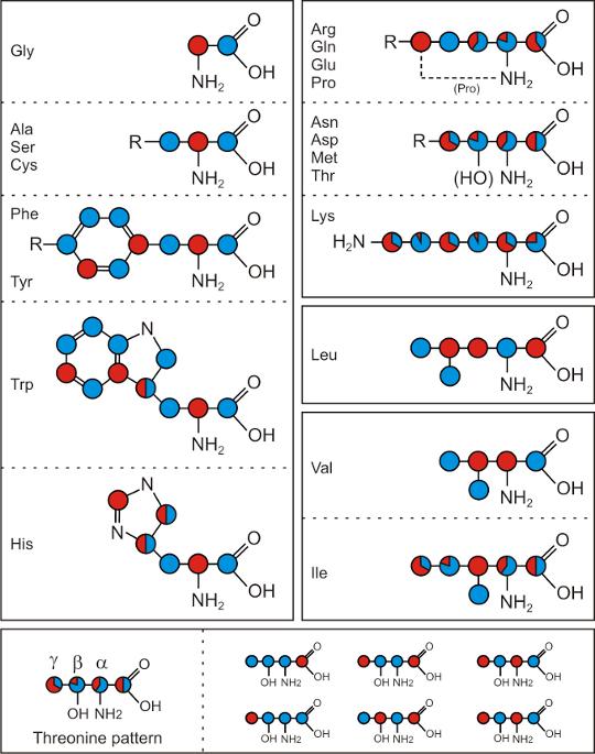 Glycerol labelling pattern