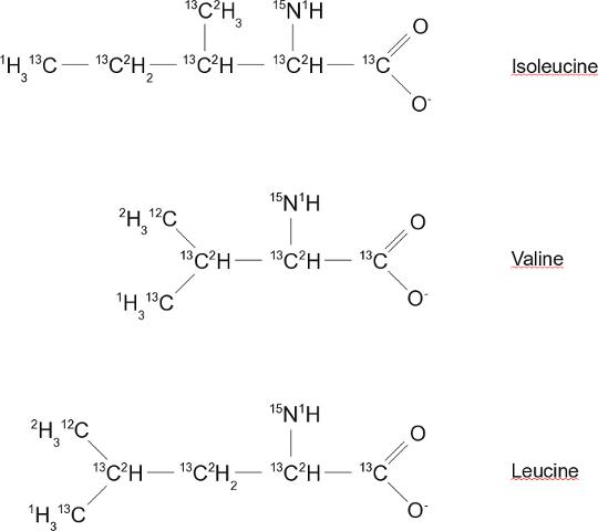 Аргинин изолейцин